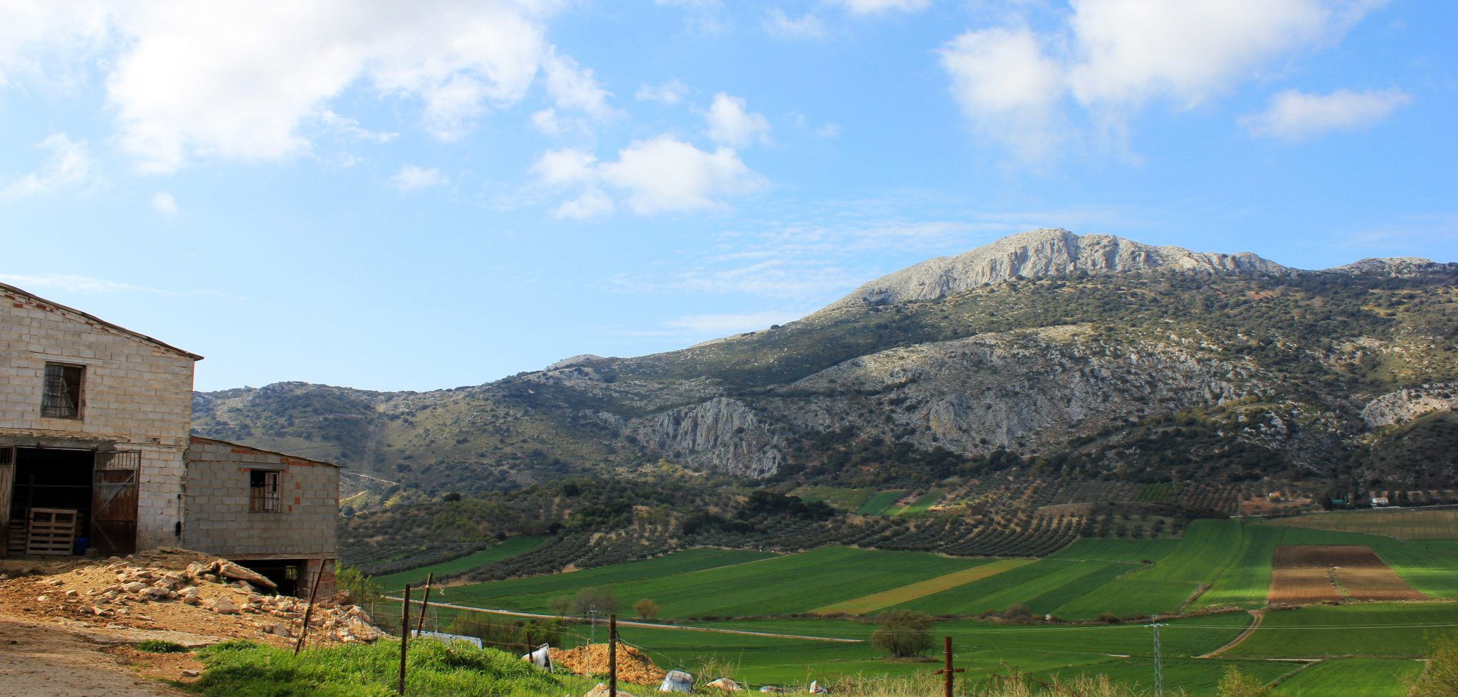 olive oil route nerja