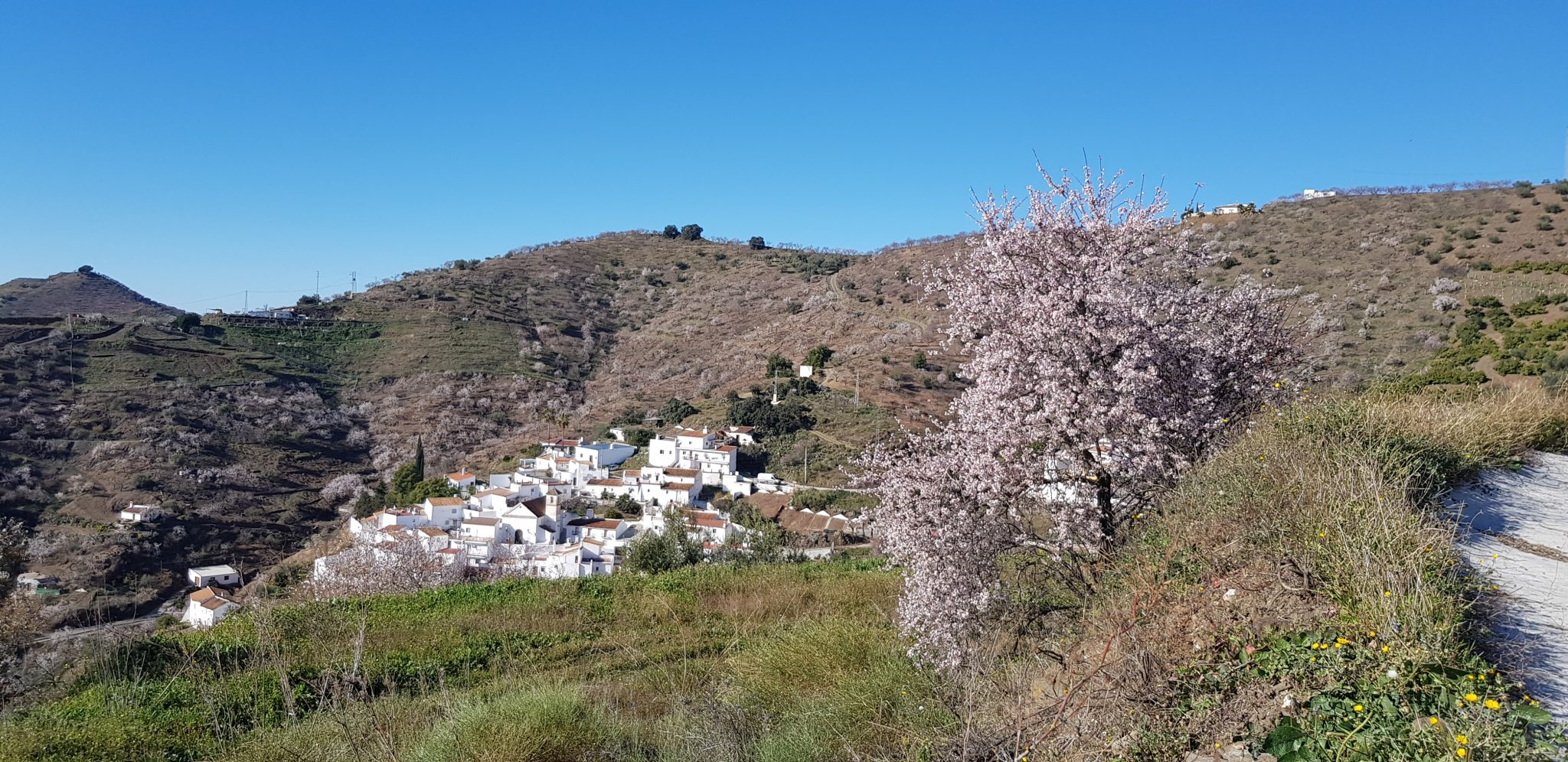 almond blossom nerja