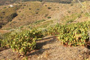wineyards-east-malaga